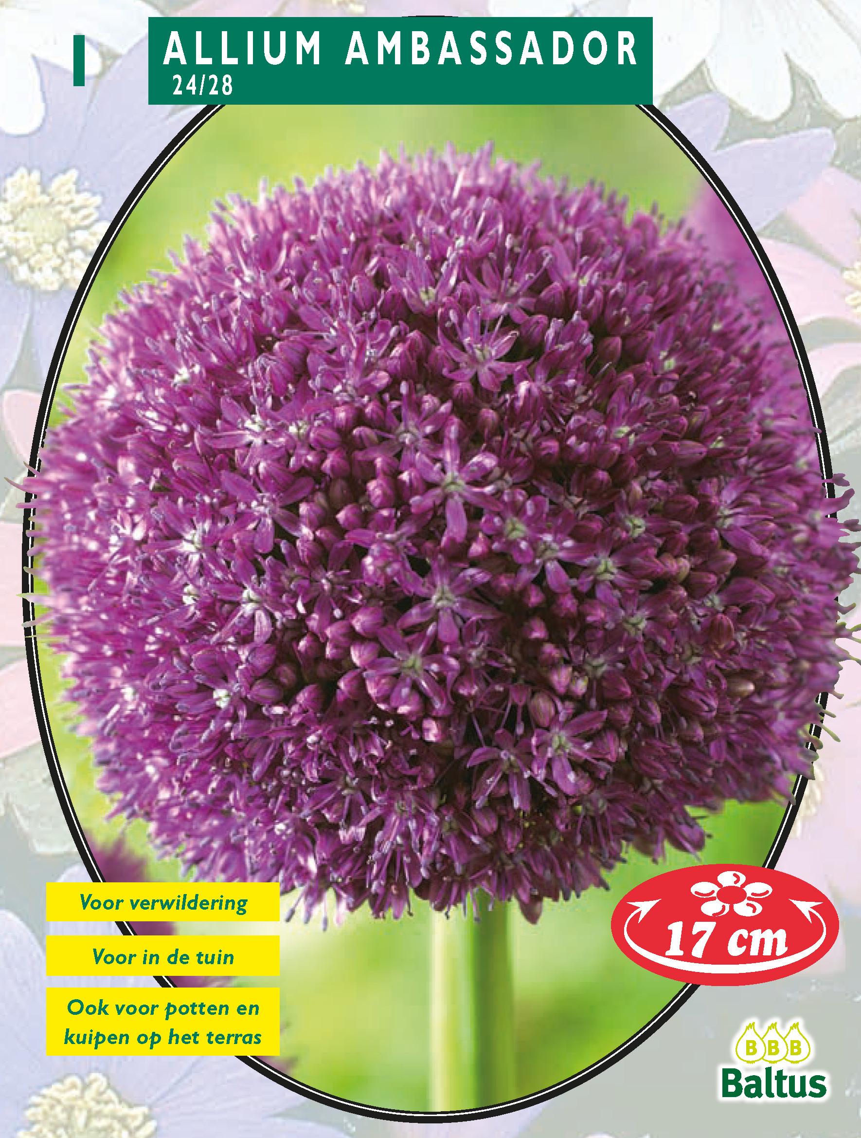 b657f1add 31, 35, Allium Ambassador per ...