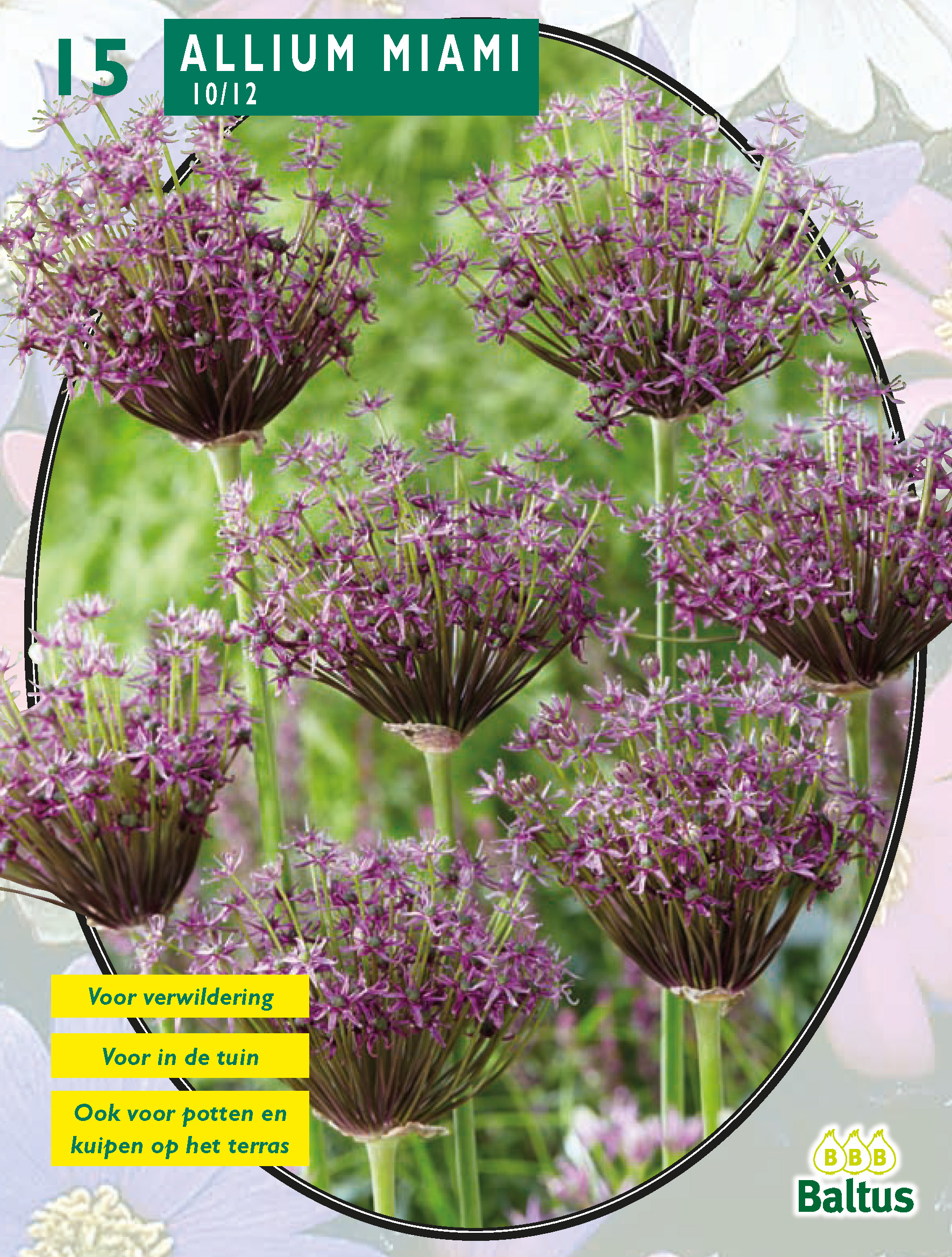 07a7ca2ee 38, 75, Allium Miami per ...