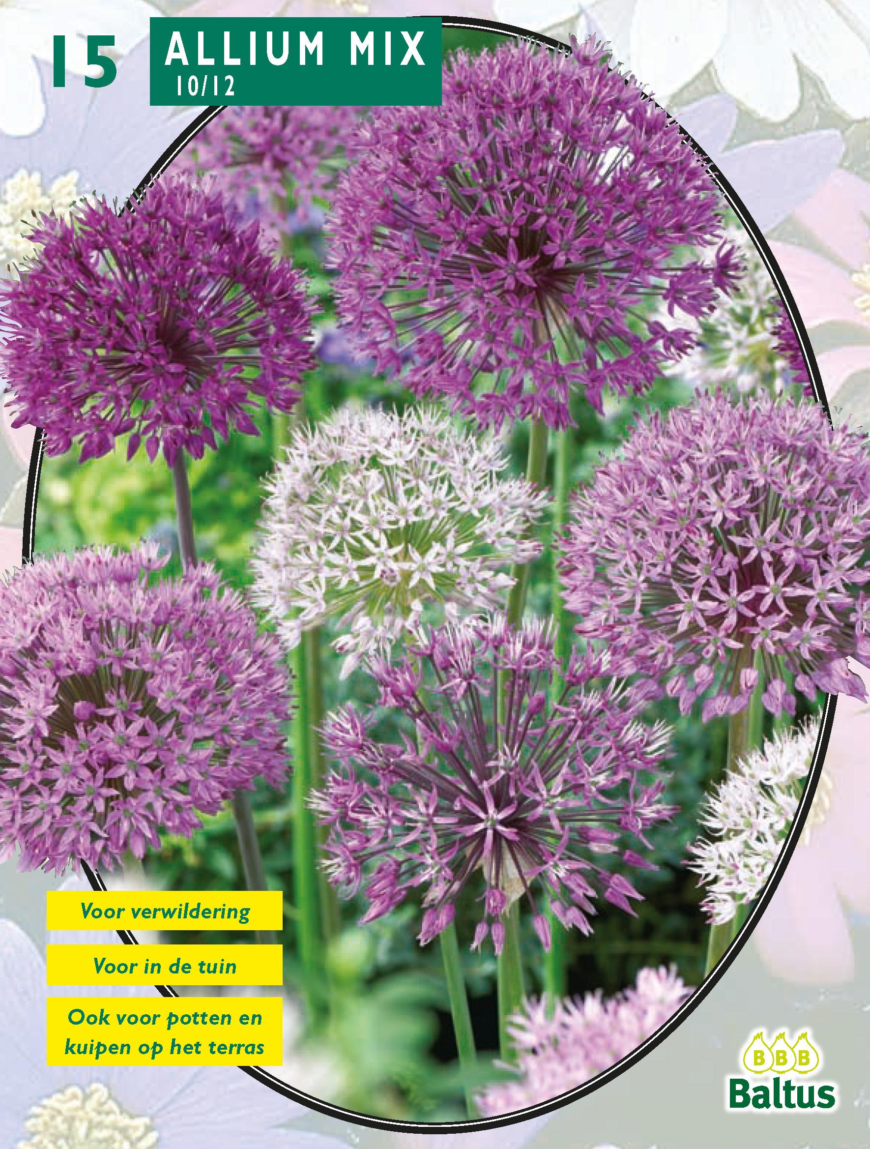 8fdd349c3 49, 166, Allium Mix Paars-Wit per ...