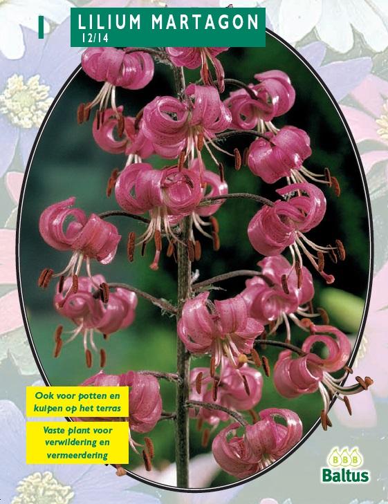 vaste plant 40 cm