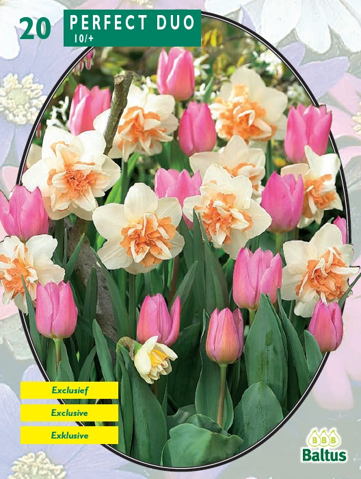 577226fff 130, 1145, Perfect Duo per 20 (нарциссы+тюльпаны) ...